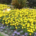 Floral tribute to Marie Curie in Upton, Poole